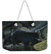 Black Bear With Her Young Cub Tagging Weekender Tote Bag