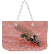 Black Fly Weekender Tote Bag