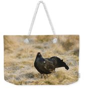 Black Grouse Displaying On A Lek Weekender Tote Bag