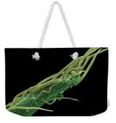 Black Locust Thorn, Sem Weekender Tote Bag