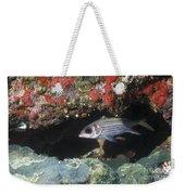 Blackfin Squirrelfish Swimming Weekender Tote Bag