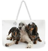 Blue Belton Setter And Dachshund Pups Weekender Tote Bag