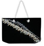 Blue Sawtooth Shrimp On Whip Coral Weekender Tote Bag