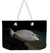 Bluespine Unicornfish Weekender Tote Bag