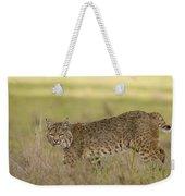 Bobcat Female Walking Santa Cruz Weekender Tote Bag by Sebastian Kennerknecht