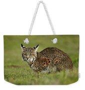 Bobcat Juvenile Santa Cruz California Weekender Tote Bag by Sebastian Kennerknecht