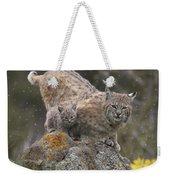 Bobcat Mother And Kitten In Snowfall Weekender Tote Bag by Tim Fitzharris