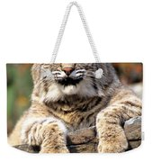 Bobcat Snoozes In The Sun Weekender Tote Bag