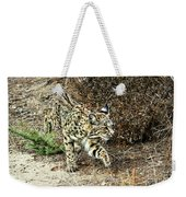 Bobcat Stalking Prey Weekender Tote Bag
