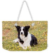 Border Collie In Field Of Yellow Flowers Weekender Tote Bag