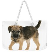 Border Terrier Puppy Weekender Tote Bag