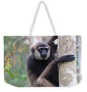 Bornean White-bearded Gibbon Weekender Tote Bag