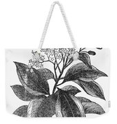 Botany: Cinnamon Tree Weekender Tote Bag