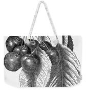 Botany: The Cherry Weekender Tote Bag