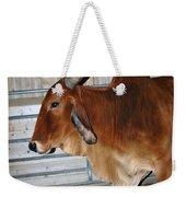 brahma Cow Weekender Tote Bag