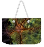 Brittle Star On Sponge, Belize Weekender Tote Bag