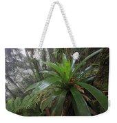 Bromeliad And Tree Ferns Colombia Weekender Tote Bag