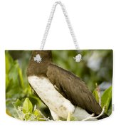 Brown Booby Sula Leucogaster Weekender Tote Bag