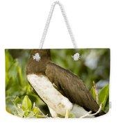 Brown Booby Sula Leucogaster Weekender Tote Bag