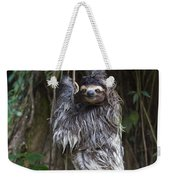 Brown Throated Three Toed Sloth Mother Weekender Tote Bag