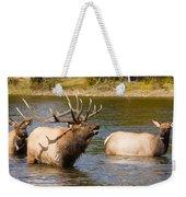 Bugling Bull Elk And 2 Female Cows In Estes Lake  Co Weekender Tote Bag