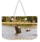 Bugling Bull Elk And Calf Colorado Rut 4 Weekender Tote Bag