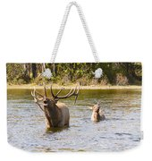 Bugling Bull Elk And Calf Colorado Rut 5 Weekender Tote Bag