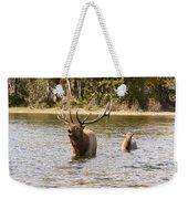 Bugling Bull Elk And Calf Colorado Rut  Weekender Tote Bag