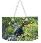 Bull Moose At Dusk Weekender Tote Bag
