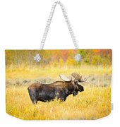 Bull Moose In Autumn Weekender Tote Bag