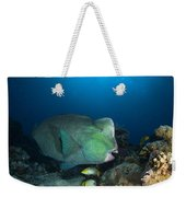 Bumphead Parrotfish, Australia Weekender Tote Bag