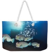 Bumphead Parrotfish Weekender Tote Bag