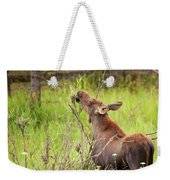 Calf In The Willows Weekender Tote Bag