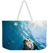 California Sea Lion, La Paz, Mexico Weekender Tote Bag by Todd Winner