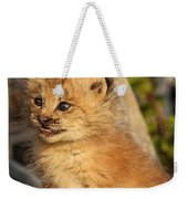 Canadian Lynx Kitten, Alaska Weekender Tote Bag