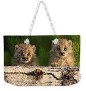 Canadian Lynx Kittens Looking Weekender Tote Bag