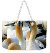 Cape Gannet Courtship Weekender Tote Bag by Bruce J Robinson