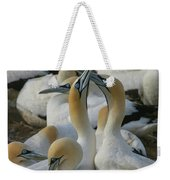 Cape Gannets Weekender Tote Bag