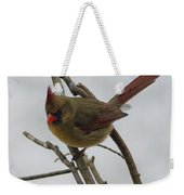 Cardinal Cold Winter Stare Weekender Tote Bag