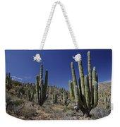 Cardon Pachycereus Pringlei Cacti Weekender Tote Bag
