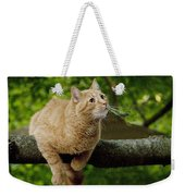 Cat Hanging On A Limb Weekender Tote Bag
