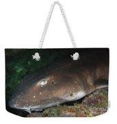 Cat Shark Sleeping, Pulau Tioman Weekender Tote Bag