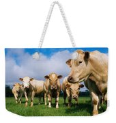 Cattle, Charolais Weekender Tote Bag