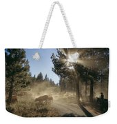 Cattle Cross A Gravel Road On A Fall Weekender Tote Bag