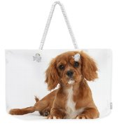 Cavalier King Charles Spaniel Puppy Weekender Tote Bag