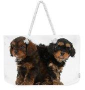 Cavapoo Pups Weekender Tote Bag