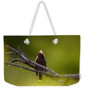 Cedar Waxwing Perched In Tree Weekender Tote Bag