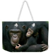 Chimpanzee Pan Troglodytes Adult Female Weekender Tote Bag