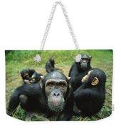Chimpanzee Pan Troglodytes Female Weekender Tote Bag