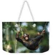 Chimpanzee Pan Troglodytes Resting Weekender Tote Bag